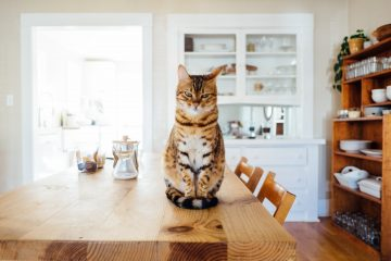 Un chat sur une table